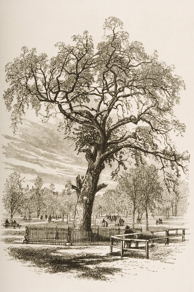 Boston Massachusetts, the Liberty Tree in 1870s. From American Pictures Drawn With Pen And Pencil by Rev Samuel Manning circa 1880 : Stock Photo