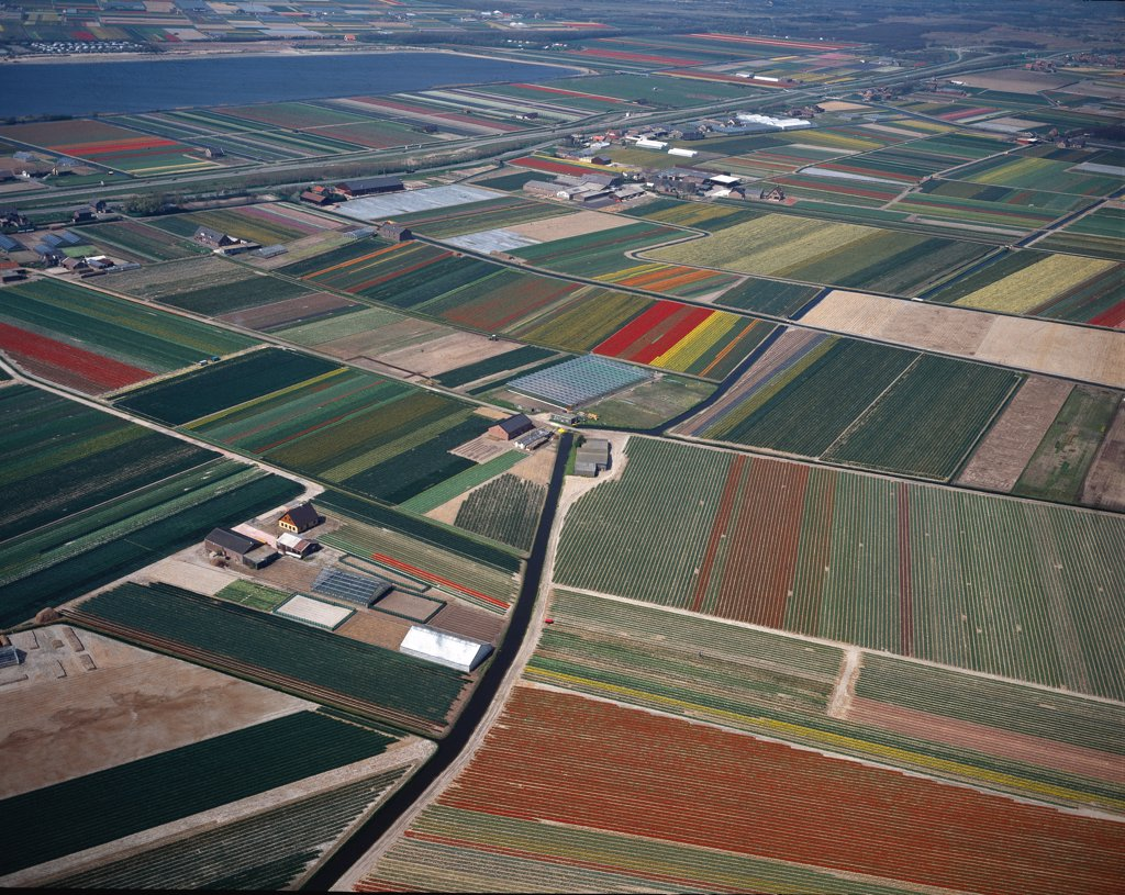 Aerial view of a Tulip Flower Fields. Photography. Haarlemmermeer, Holland.  : Stock Photo