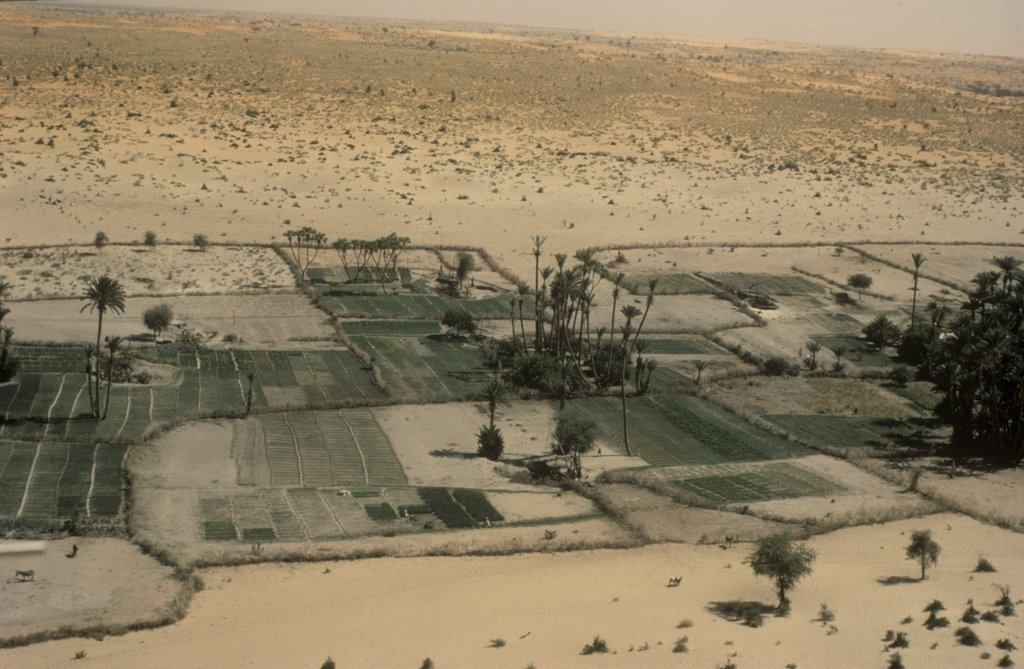 OASIS GARDENING, SUDAN. .  : Stock Photo