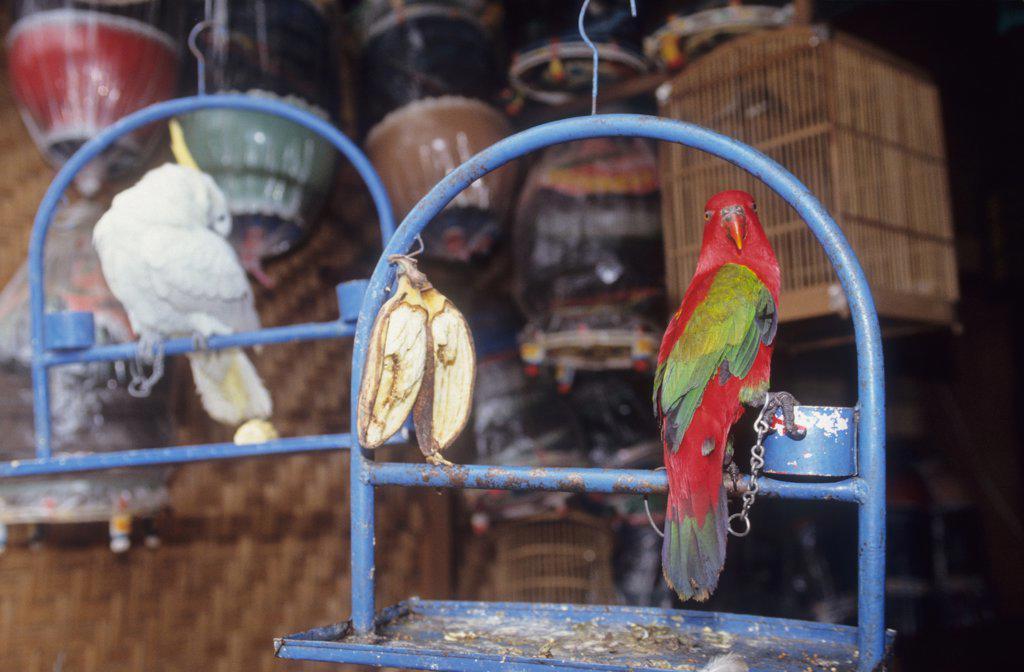 BIRD & ANIMAL MARKET, BALI. Denpasar. .  : Stock Photo