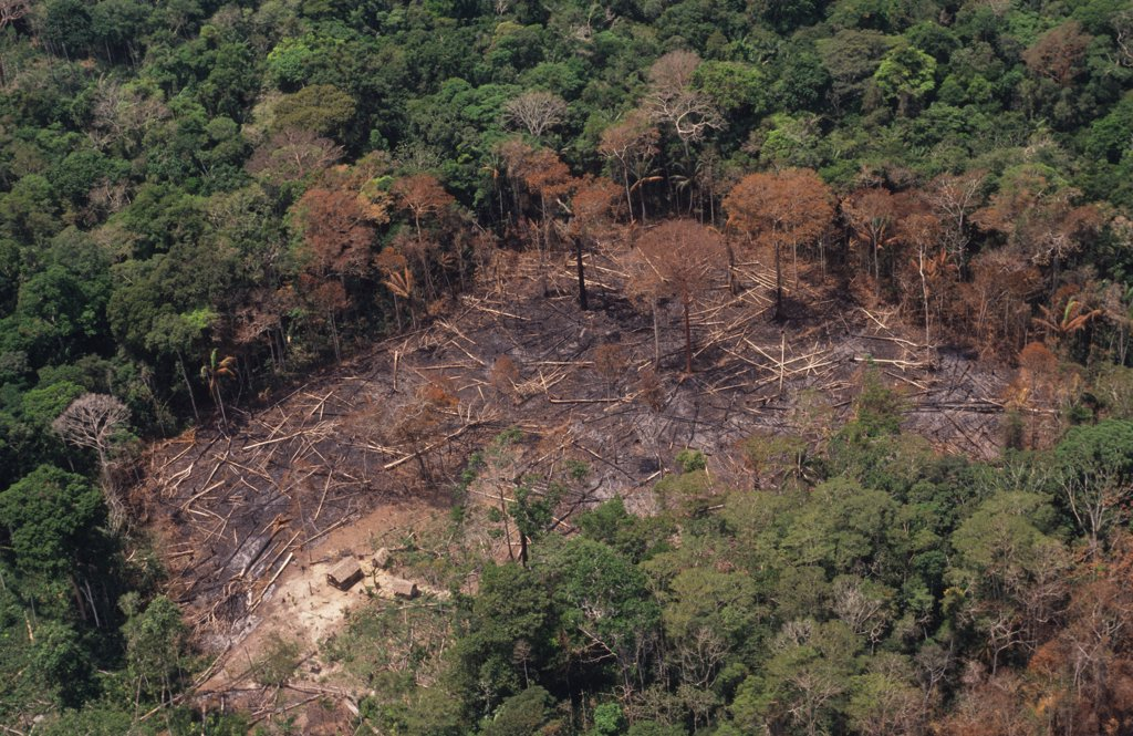DEFORESTATION, BRAZIL. Amazon, vicinity Rio Branco. Patches of forest burnt by migrant slash and burn cultivators to clear land to plant crops. The tree ash fertilizes the soil for only a few years. .  : Stock Photo