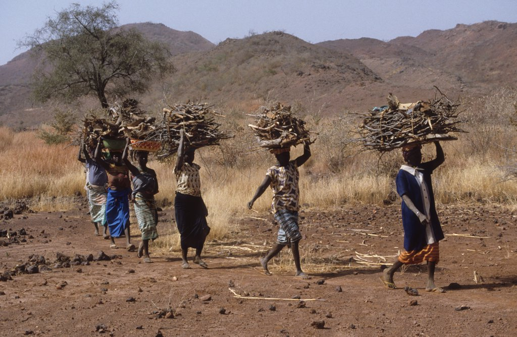 Stock Photo: 1899-44005 FUELWOOD, BURKINA FASO. Yatenga Province, Kalsaka Village. Women returning with fuelwood. .