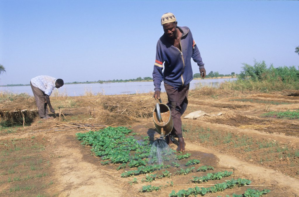 Stock Photo: 1899-44019 AGRICULTURE, BURKINA FASO. Watering vegetables. .