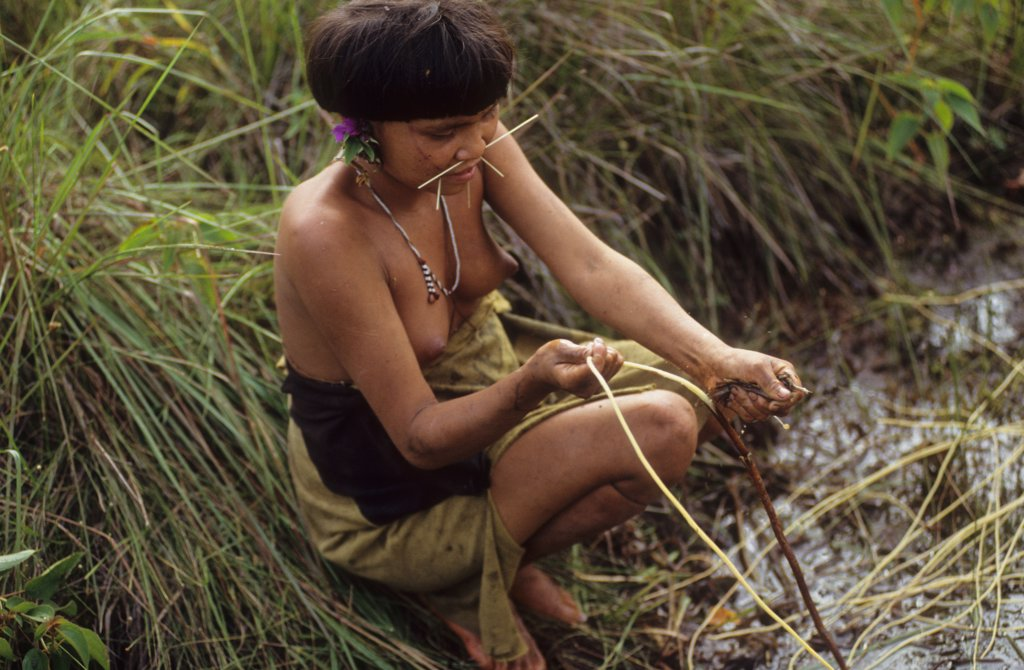 YANOMAMI AMERINDIANS, VENEZUELAN AMAZONAS. Serra Parima, orinoco river basin. Yanomami girl collecting plants used to make rope. . The Yanomami continue to live as tribal farmers, practising an ecologically sound form of shifting cultivation, supplementing thier diet with fishing and hunting. They live in one of the most inaccessible regions of the Amazon, and of all the Amerindian tribes, the Yanomami have the least exposure to the modern world. Their future may now be threatened by diseases sp : Stock Photo