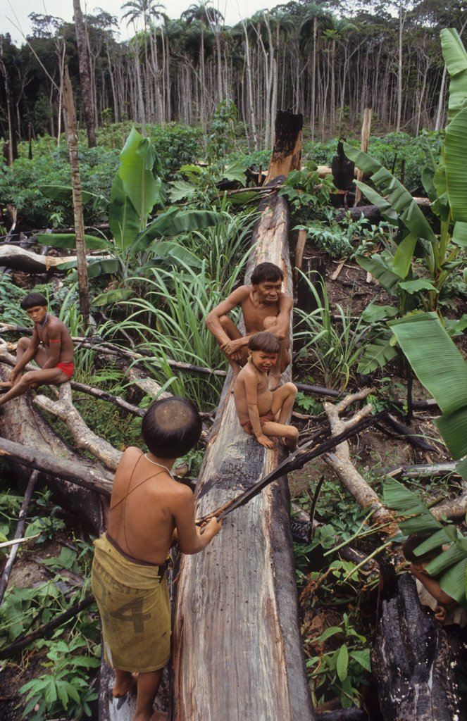 Stock Photo: 1899-44129 YANOMAMI AMERINDIANS, VENEZUELAN AMAZONAS. Serra Parima, Orinoco river basin. . The Yanomami continue to live as tribal farmers, practising an ecologically sound form of shifting cultivation, supplementing thier diet with fishing and hunting. They live in one of the most inaccessible regions of the Amazon, and of all the Amerindian tribes, the Yanomami have the least exposure to the modern world. Their future may now be threatened by diseases spread by illegal Brazilian gold miners.
