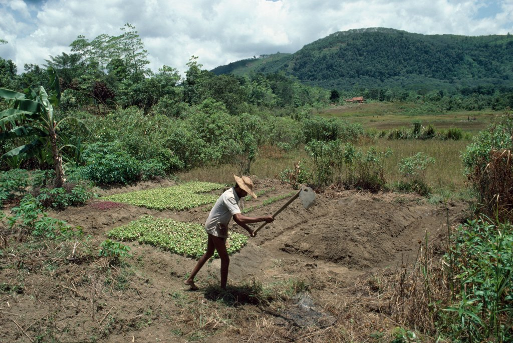 Stock Photo: 1899-44372 AGRICULTURE, SRI LANKA. Digging. .