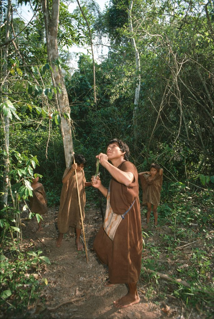Stock Photo: 1899-44451 AMAZON - PERU, vicinity Satipo. Campa or Ashaninka Indians. Hunting. Bows and arrows with hardwood tips as well as catapults are used to catch animals, birds and even insects.