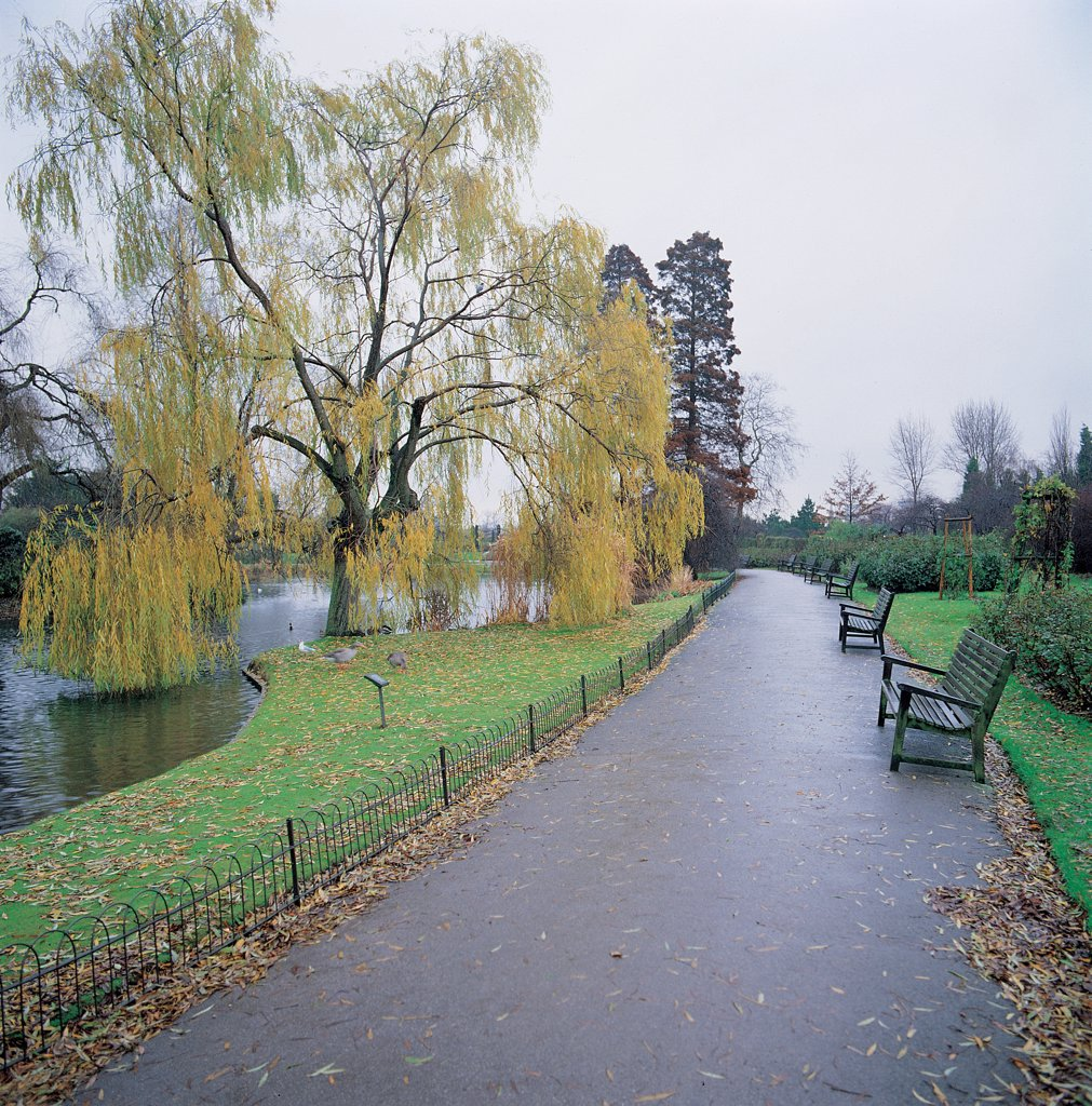 Stock Photo: 1899-45565 Regent's Park, by Nash John, 19th Century, . United Kingdom: England: London: London: Regent's Park. Regent's Park path bench park tree weeping willow river
