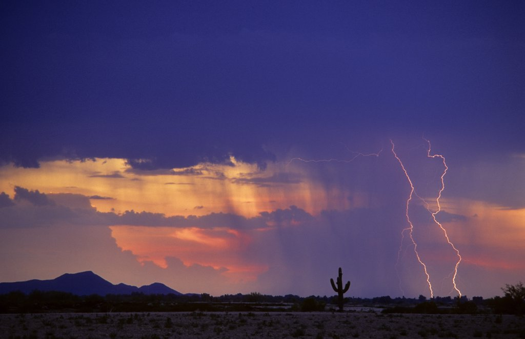 Stock Photo: 1899-50042 Two cloud-to-ground lightning strikes in a rain curtain at sunset in Avra Valley, silhouetting a lone saguaro cactus in the Sonoran Desert.   Tucson, Arizona, USA.