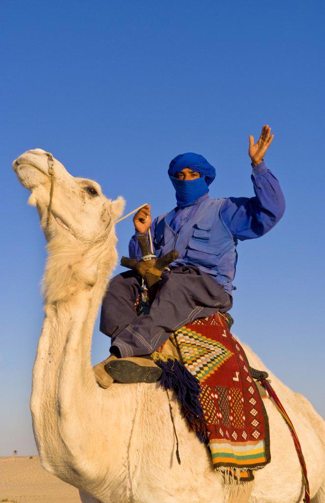 Stock Photo: 1899-53132 Local Bedouin Man On Camel Ride, Douz, Sahara Desert, Tunisia
