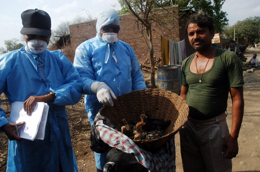 Stock Photo: 1899-54747 Villagers Hand Over Household Poultry To Government Health Workers For Culling Infected Chickens In The Backyard Of The Villager'S Houses At Hingona Village In Jalgaon District As Bird Flu Is Detected In Maharashtra, India