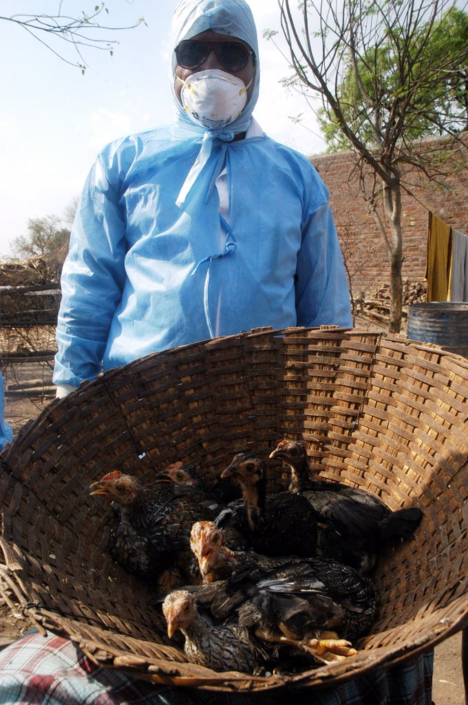 Government Health Workers Go House To House To Cull Infected Chickens In The Backyard Of The Villager'S Houses At Hingona Village In Jalgaon District As Bird Flu Is Detected In Maharashtra, India : Stock Photo