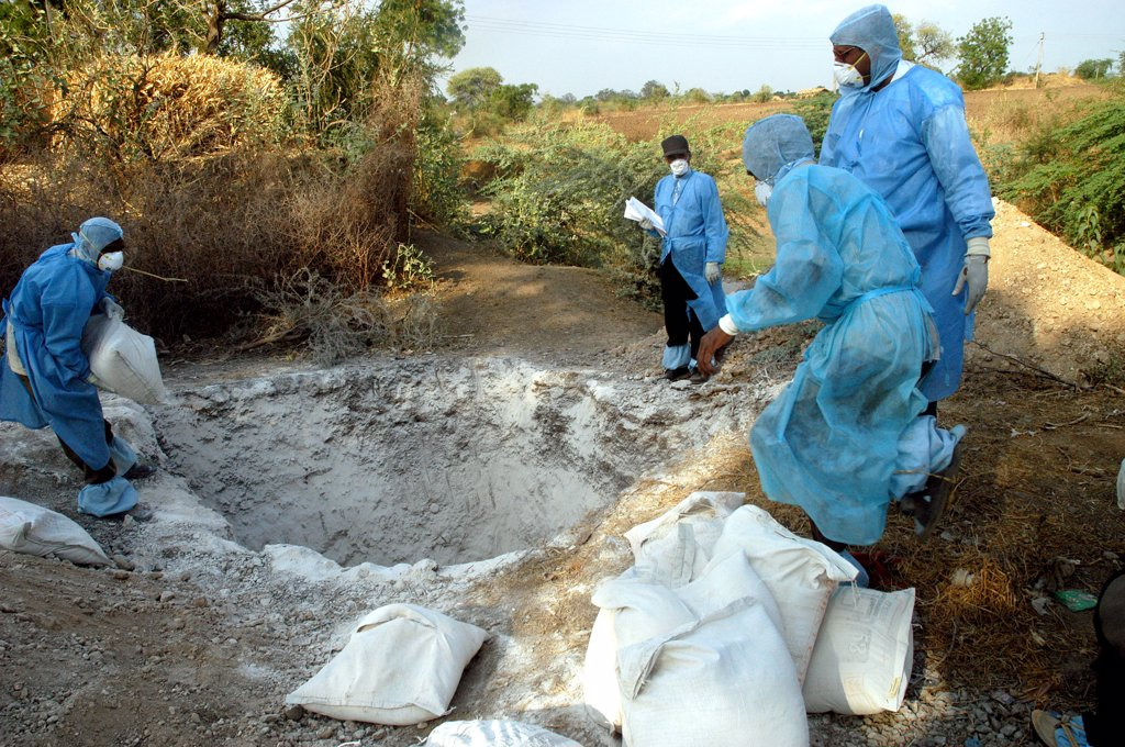 Health Workers Fill The Pit With Lime Powder To Bury Infected Chickens Collected In The Backyard Of The Houses As Bird Flu Is Detected At Hingona Village In Jalgaon District, Maharashtra, India : Stock Photo