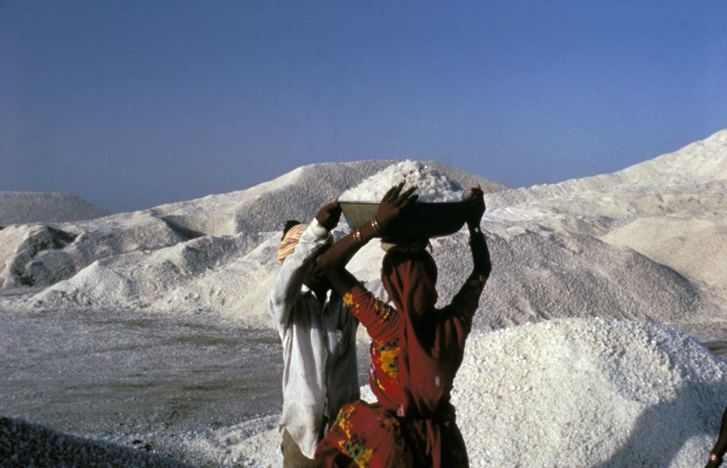 Stock Photo: 1899-55645 India, Little Ran Desert In Gujarat: Laborers In Salt Making Area