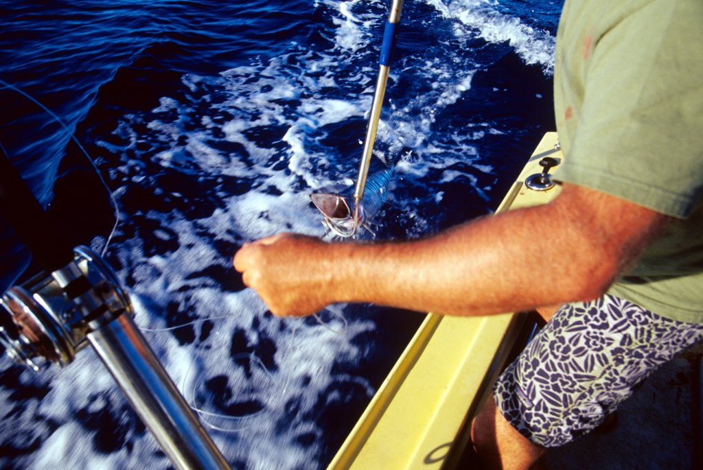 Stock Photo: 1899-60655 Man Pulling In An Ono While Deep Sea Fishing Off The North Shore Of Oahu, Hawaii.