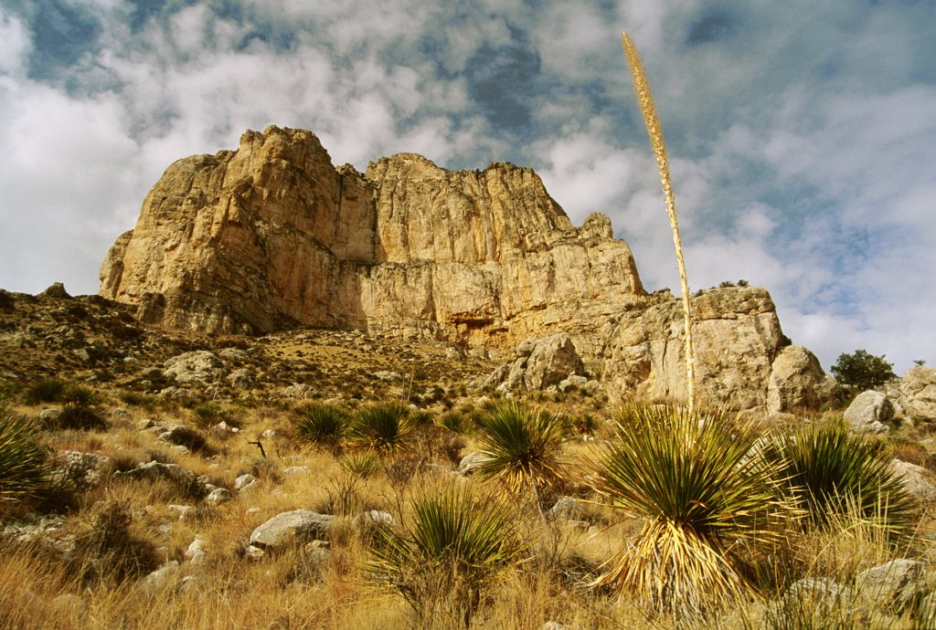 Stock Photo: 1899-61590 Texas, Guadalupe National Park. Desert Vegetation And Rock Outcrop