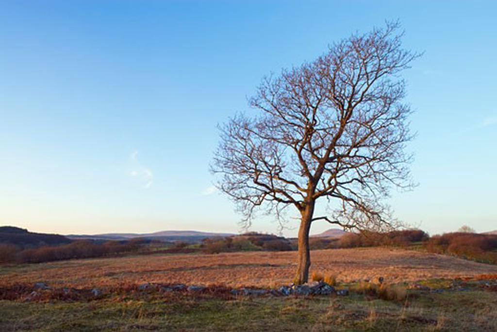 Winter tree nr Ystradfellte Brecon Beacons Powys Wales : Stock Photo