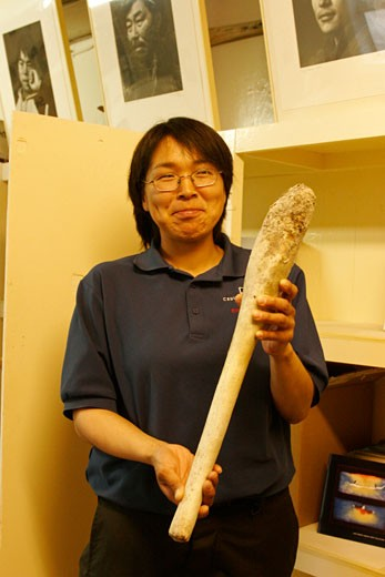 A young inuit woman presenting a walrus penis  in the Cape Dorset Museum  on Baffin island : Stock Photo