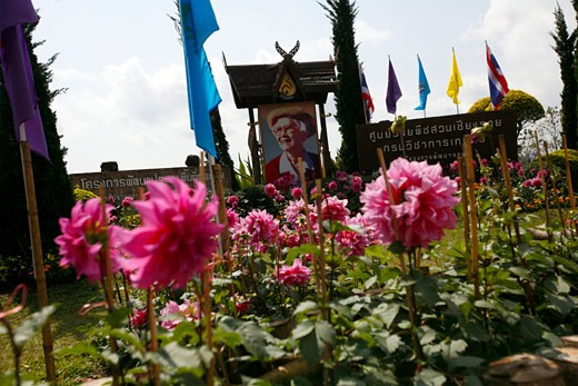 Some flowers in front of the Queen mother portrait in the entrance of the Doi Tung Royal Villa : Stock Photo