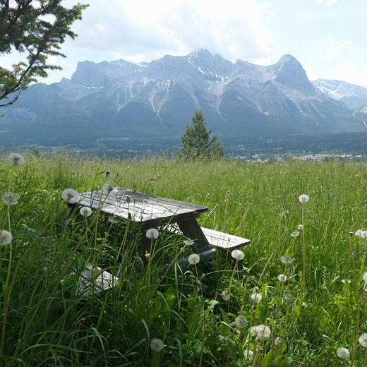 Picnic bench nestled in deep grasses of alpine meadow  with Ha Ling Peak behind  near Canmore  Canada  Alberta : Stock Photo