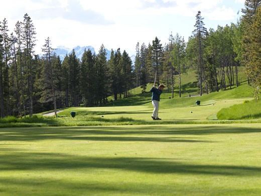 Man golfs on forested course  Silvertip Golf Course  Canmore  Canada  Alberta : Stock Photo