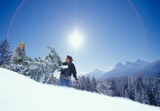Stock Photo: 1910-1341 Couple bringing home Christmas tree on snowy hillside near Canmore CANADA Alberta
