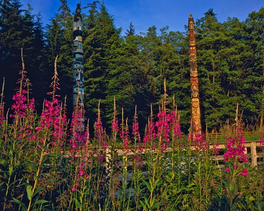 Stock Photo: 1912-1011 Tlingit Culture Totems  Fireweed  Totem Bight State Park  Tongass Narrows near Ketchikan  Alaska