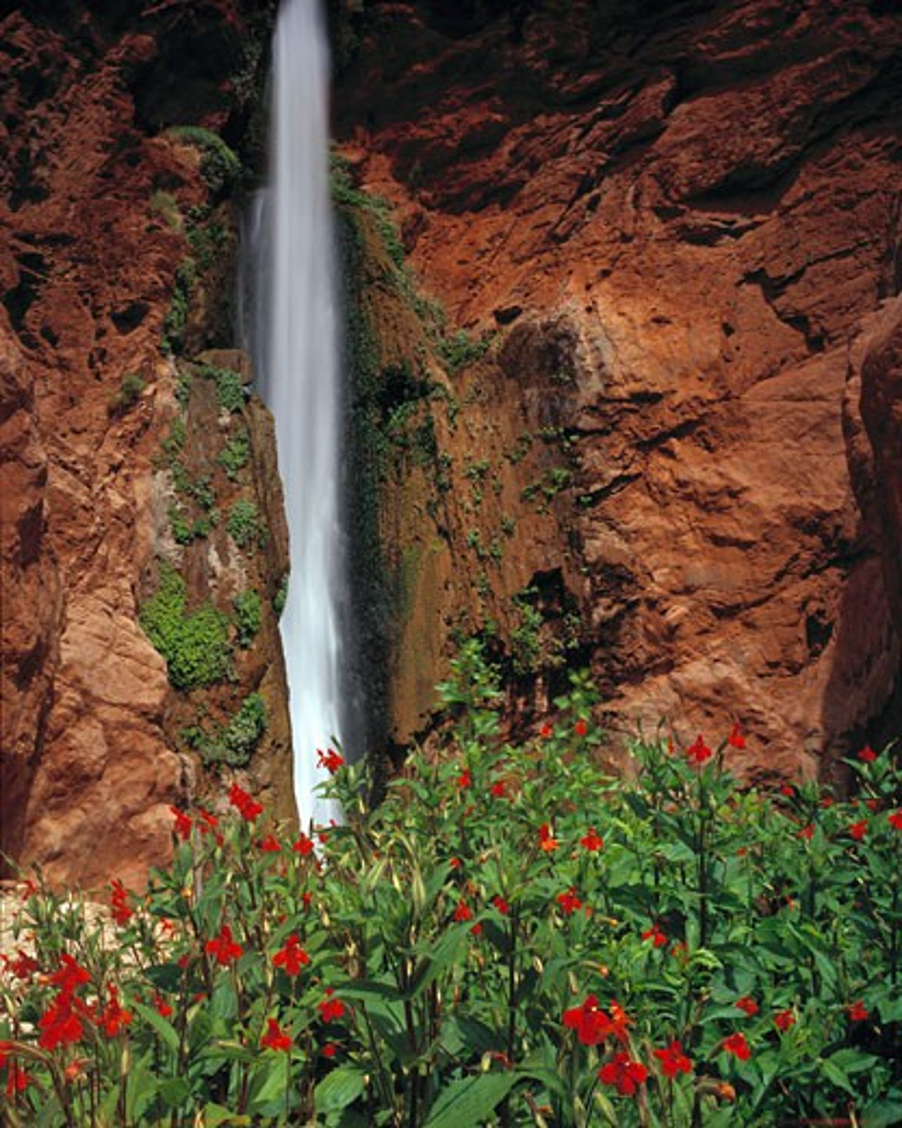 Deer Creek Falls  Monkeyflowers  Grand Canyon National Park  Arizona : Stock Photo