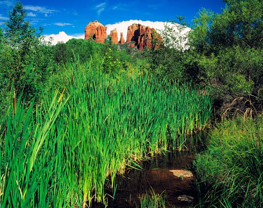 Lush Greenery at Red Rock Crossing  Oak Creek  Arizona : Stock Photo