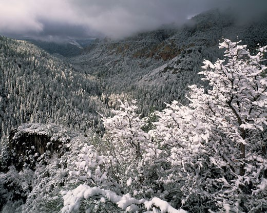 Snow at Oak Creek Canyon  Coconino National Forest  Arizona : Stock Photo