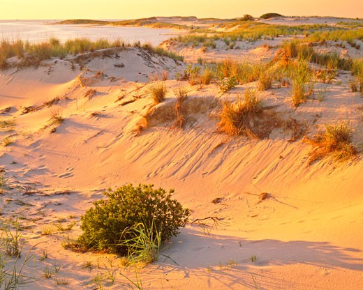 Stock Photo: 1912-1251 Dunes at Sunset  Cape Henlopen State Park   Delaware