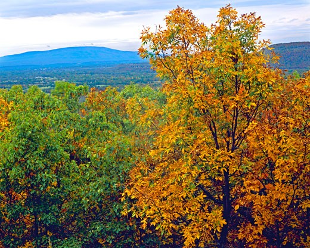 Fall Color at Poteau Mountain   Oklahoma Mountains  Heavener Runestone State Park  Oklahoma : Stock Photo