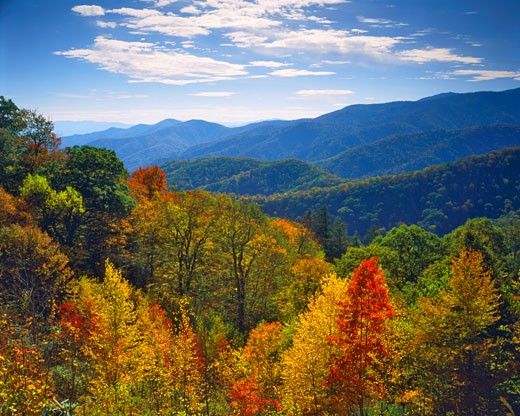 First Fall Colors  Great Smoky Mountains National Park  Southern Appalachians  Newfound Gap  North Carolina : Stock Photo