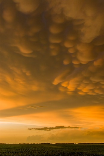 Stock Photo: 1916-6749 Canada, Mammatus clouds at sunset over prairie agricultural fields