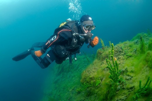 Stock Photo: 1916-7264 Eurasia, Russian Federation, Siberia, Lake Baikal, Diver and Demosponge (Lubomirskia baicalensis)