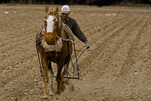 Stock Photo: 1916-7292 Argentina, Salta, Old man plowing soil with his strong horse