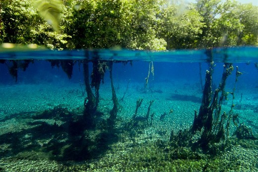 Stock Photo: 1916-7331 Brazil, Mato Grosso do Sul, Aquario natural, Bonito, Underwater plants and surrounding vegetation, natural freshwater spring preserve