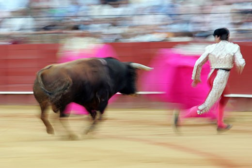 Panning shot of a bullfight action Taken at Real Maestranza bullring during a bullfight  Seville  Spain  11 June 2006 : Stock Photo
