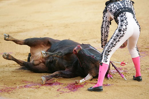 Assistant bullfighter administering the coup de grace to a bull Taken at Real Maestranza bullring during a bullfight  Seville  Spain  11 June 2006 : Stock Photo