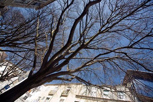 Bare tree  Alfama  Lisbon : Stock Photo