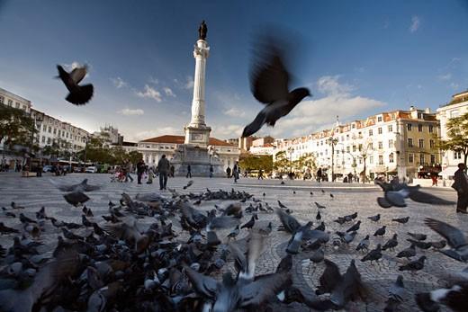 Flock of pigeons  Rossio square  Lisbon : Stock Photo