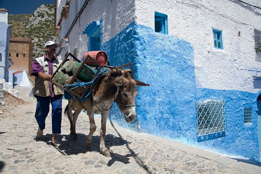 Donkey used for gas bottle delivery  Chefchaouen  Morocco : Stock Photo