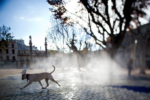 Stock Photo: 1925-2154 Dog by a fountain at a square, Alameda De Hercules, Seville, Andalusia, Spain