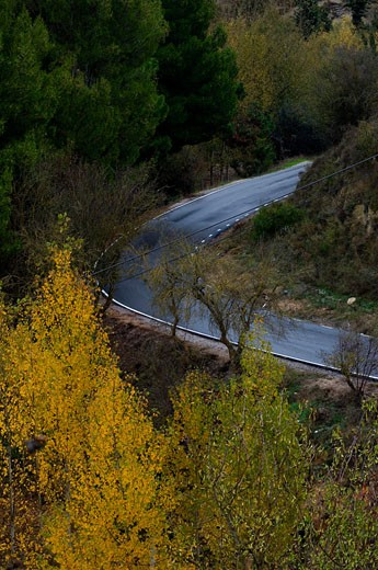 The autumn fragance in Andalusia  Spain : Stock Photo