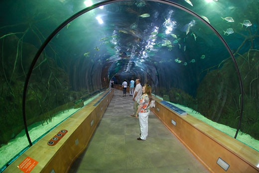 Stock Photo: 1933-2644 Oceanographic Aquarium Valencia Spain Europe  Shark tunnel