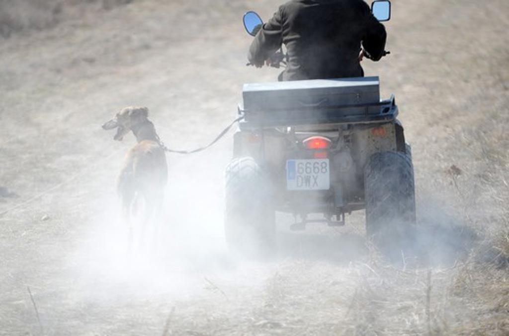 Spain, Castilla La Mancha. Driebes, Greyhound attached to motorbike : Stock Photo
