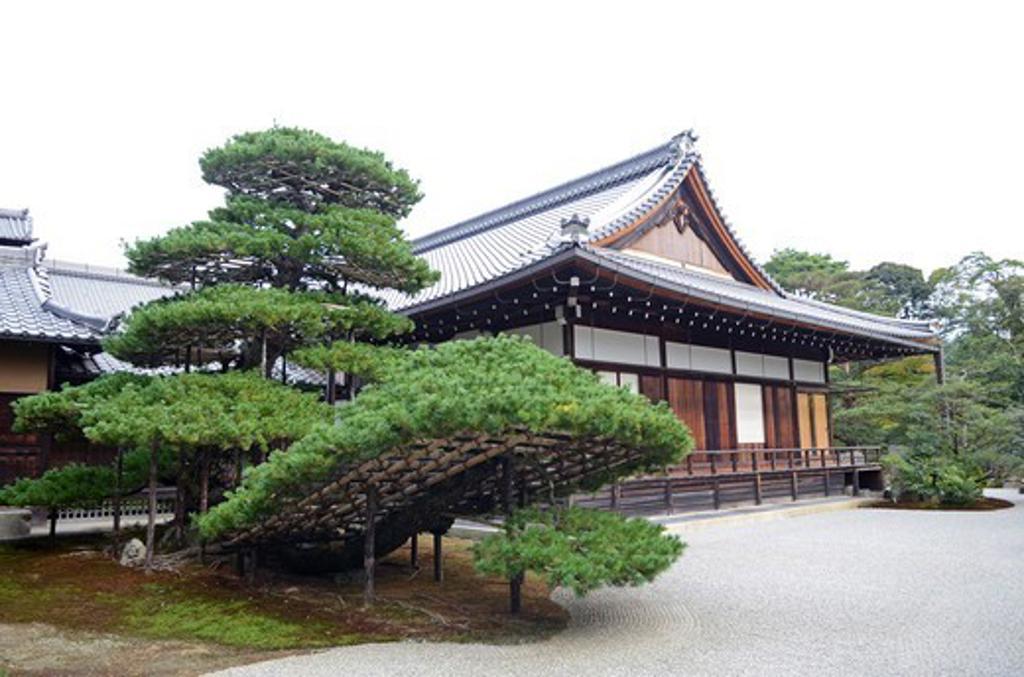 Temple of The Golden Pavilion, Kinkaku-ji Temple, Kyoto Prefecture, Honshu, Japan : Stock Photo