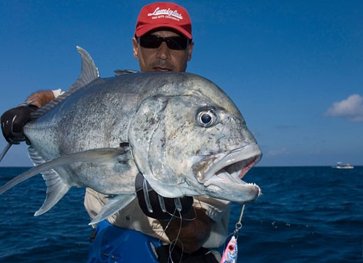 Stock Photo: 1939-1026 Caranx ignobilis   giant trevally   jigging   maldives