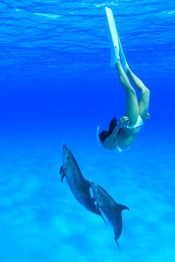 Atlantic Spotted Dolphins and Skin diver The Bahamas : Stock Photo