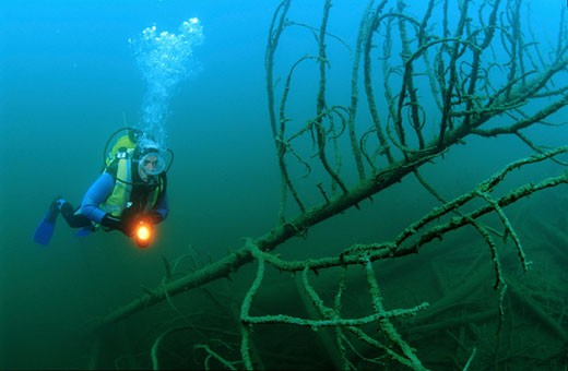 Blindsee  Nassereith  AUSTRIA Diver in an underwater placer where  because of an avalanche  innumerable trees were pressed into the blind lake : Stock Photo